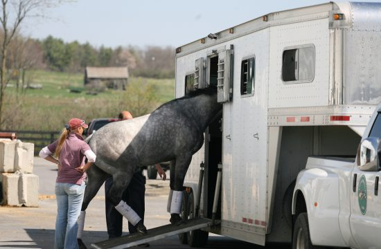 Comment transporter son cheval ?